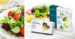 Kit 4 Salades Mix : Roquette, Lollo Rosso, Laitue et Romaine